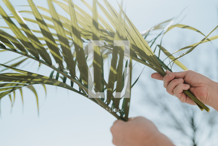 hands holding up palm fronds