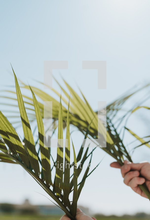 hands holding up palm leaves