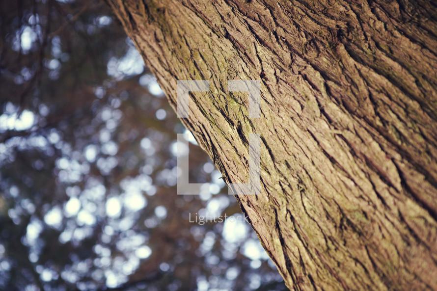 bark on a tree trunk
