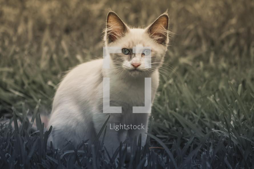 A kitten in the grass.