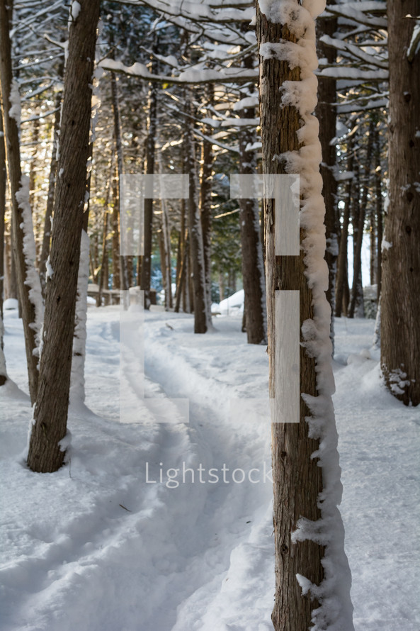 a path in the snow through a forest