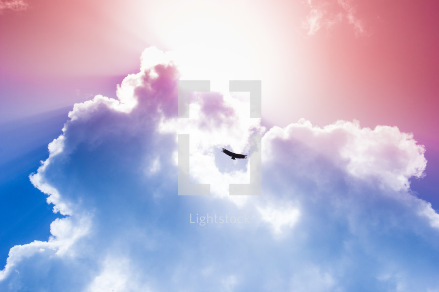 bird in the pink and blue sky