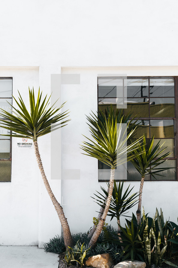 palm trees and window