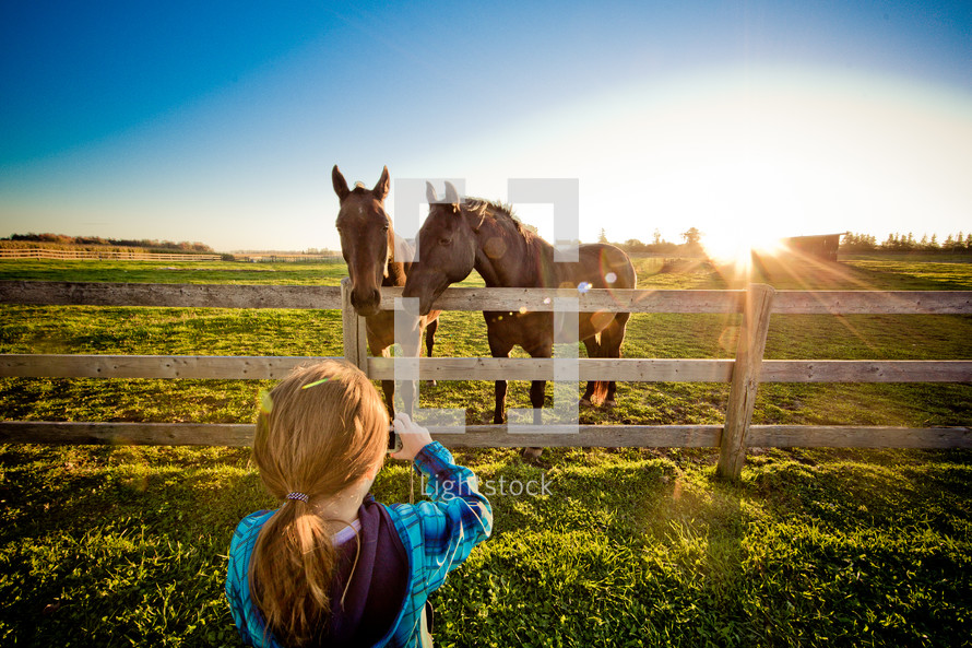 horses and a little girl