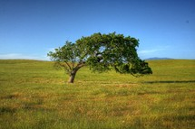 Tree in grass field