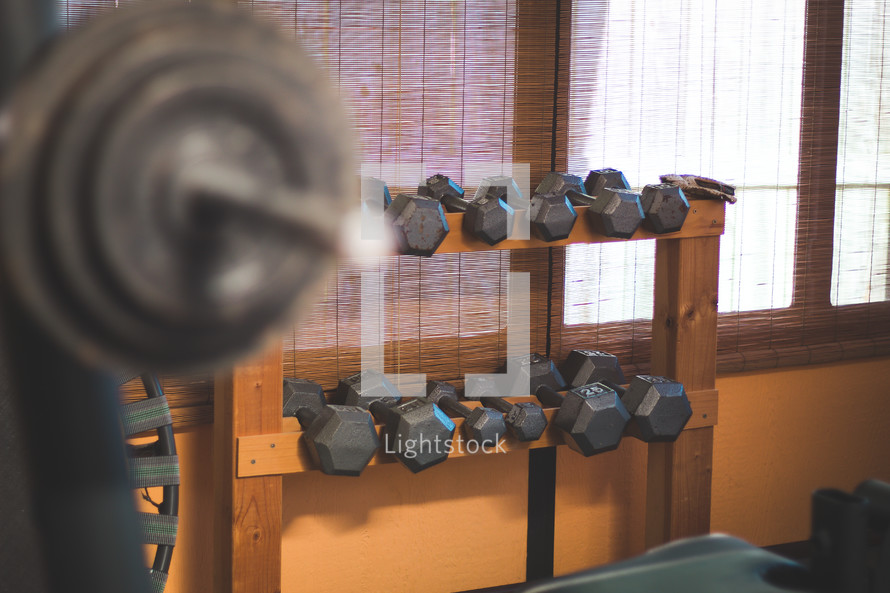 free weights at a gym