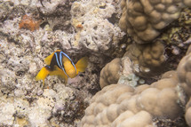 Colorful fish swimming through coral reef in ocean.