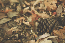 pinecone in fall leaves
