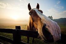horse muzzle closeup