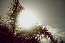 sun glowing over palm fronds