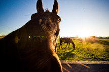 horses and sunlight