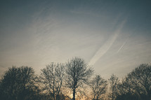 winter trees at sunset