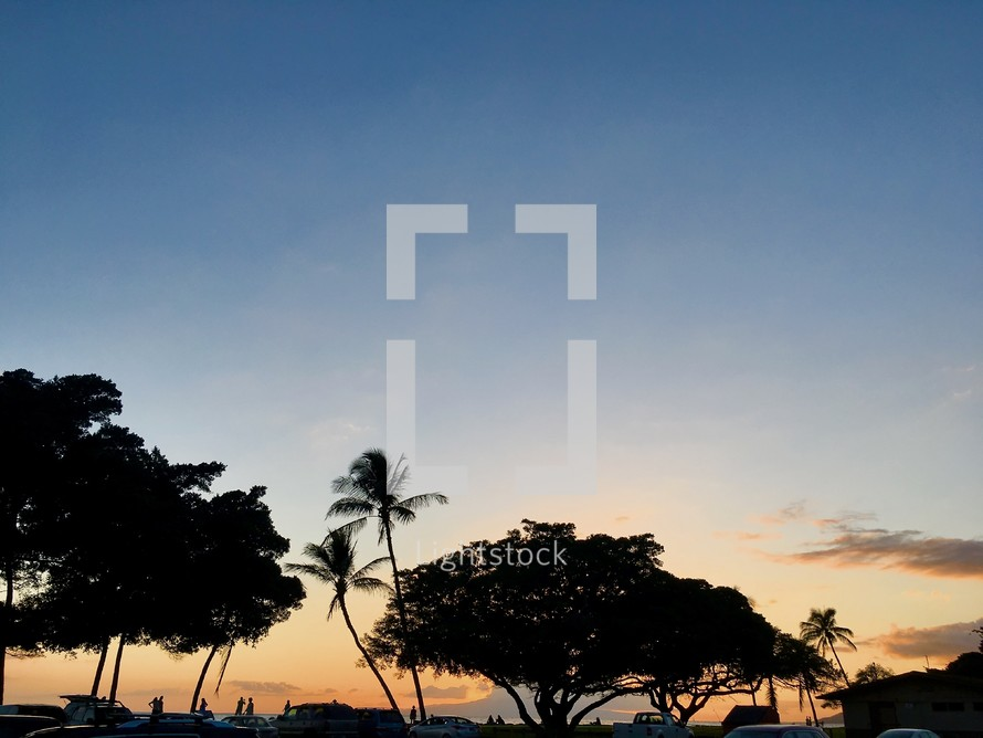 silhouettes of palm trees and parked cars at sunset