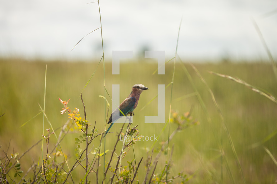bird on tall grasses