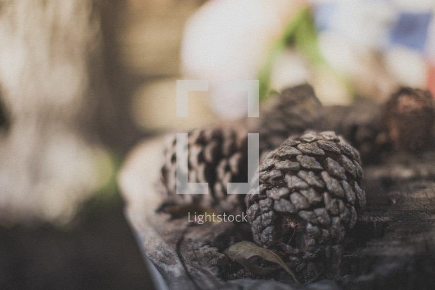Pinecones sitting on the stump of a tree