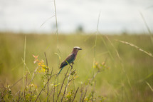 bird on tall grasses