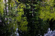 reflection of trees on lake water