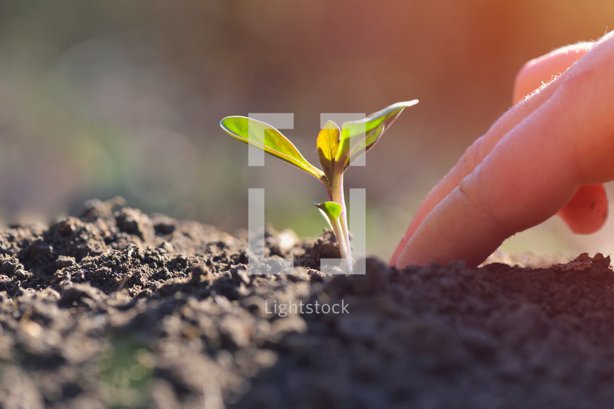 Young plant growing in garden with sunlight. Earth day concept