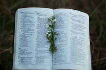 Open Bible with flower bookmark