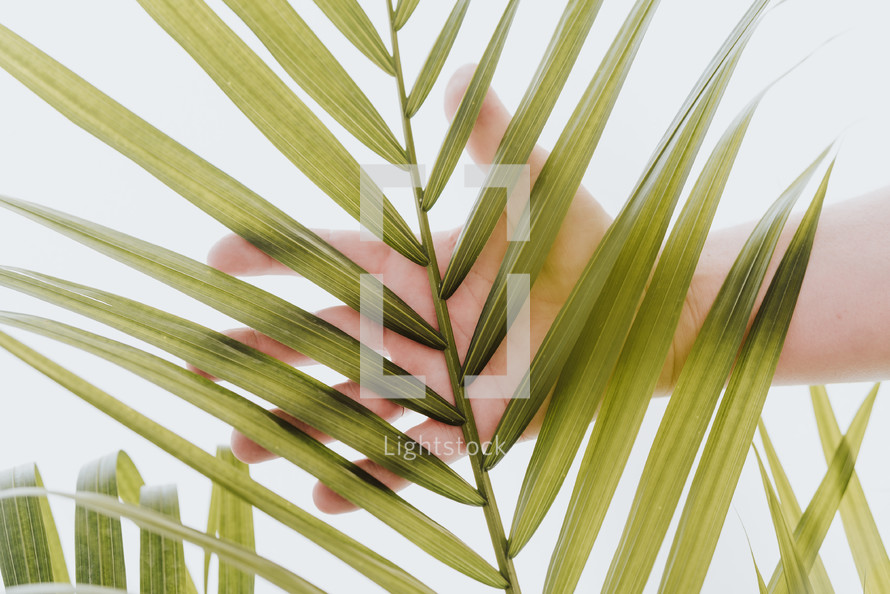 hand touch a palm frond