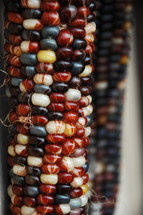 colorful corn kernels