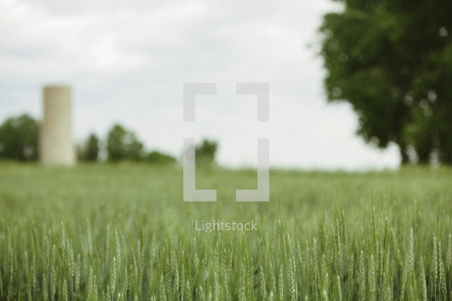 top of grass in a field