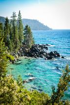 forest along rocky shoreline