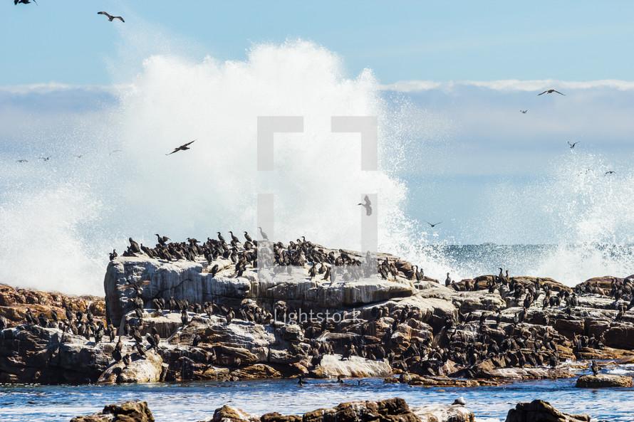 seabirds on a rock