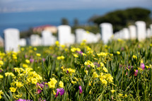 grave markers in a cemetery and wildflowers