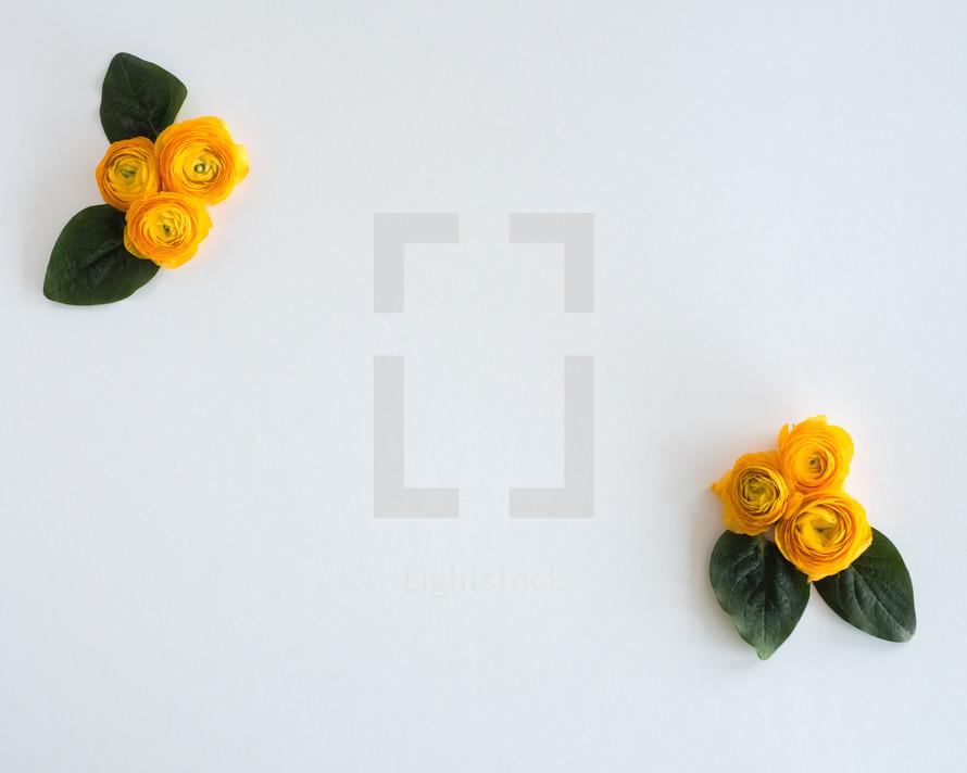 yellow roses in corners