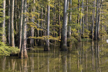trees in a swamp