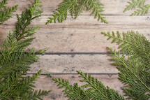 greenery on wood background