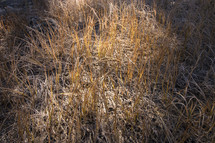 brown grasses