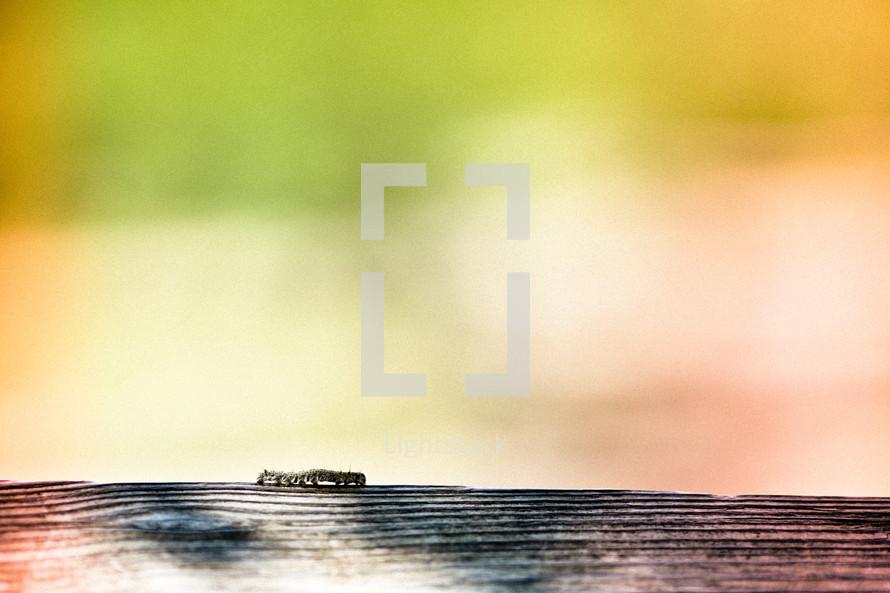 caterpillar crawling on wood fence