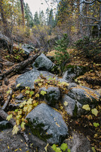forest floor with rocks