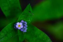 tiny purple flowers