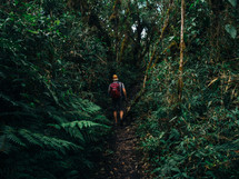 A hiker walks along a path through a jungle.