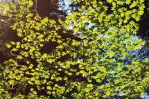 Branch of bright green leaves against the blue sky.
