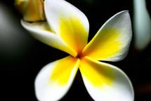 Flower bloom.