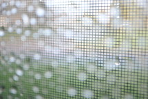 Raindrops on a window screen.