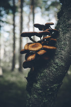mushrooms growing on a tree trunk