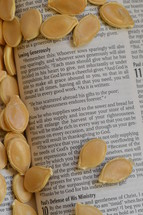 seeds on the pages of a Bible