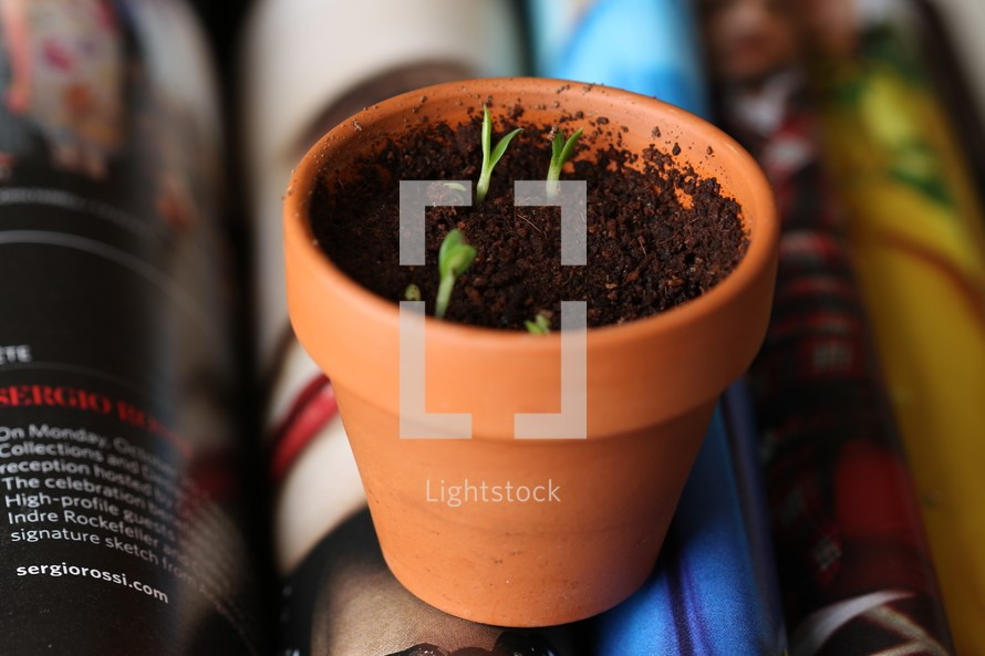 sprouting plants in a pot