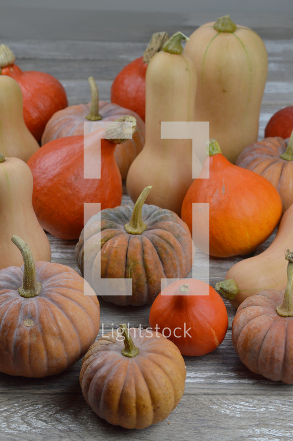 different kinds of pumpkins and gourds on raw gray wood background