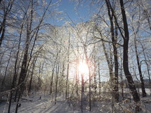 Sun shining through dormant trees after a snowfall.