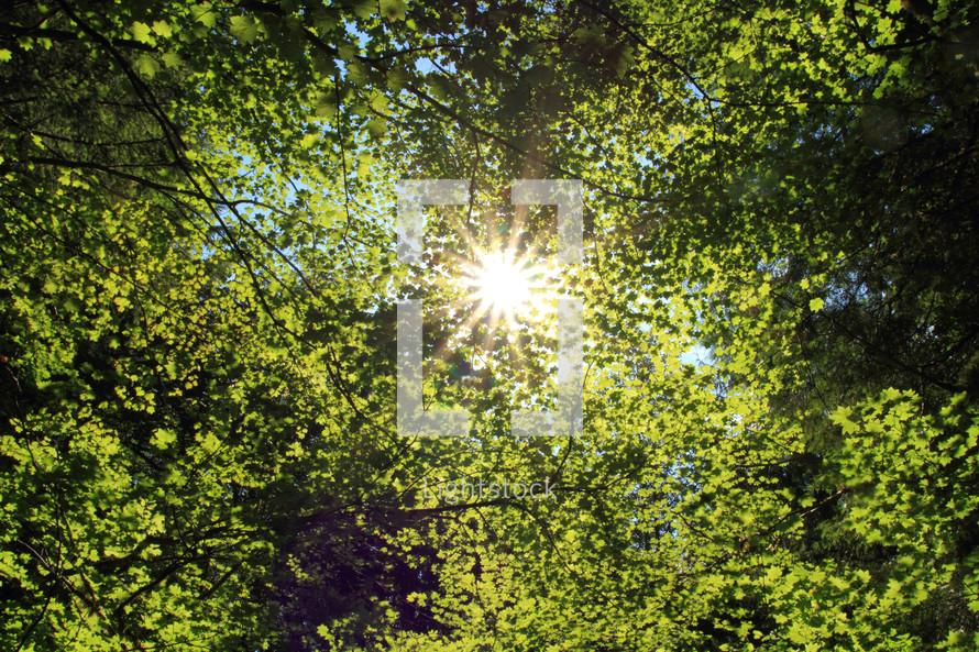 Sun beaming through bright green leaves.