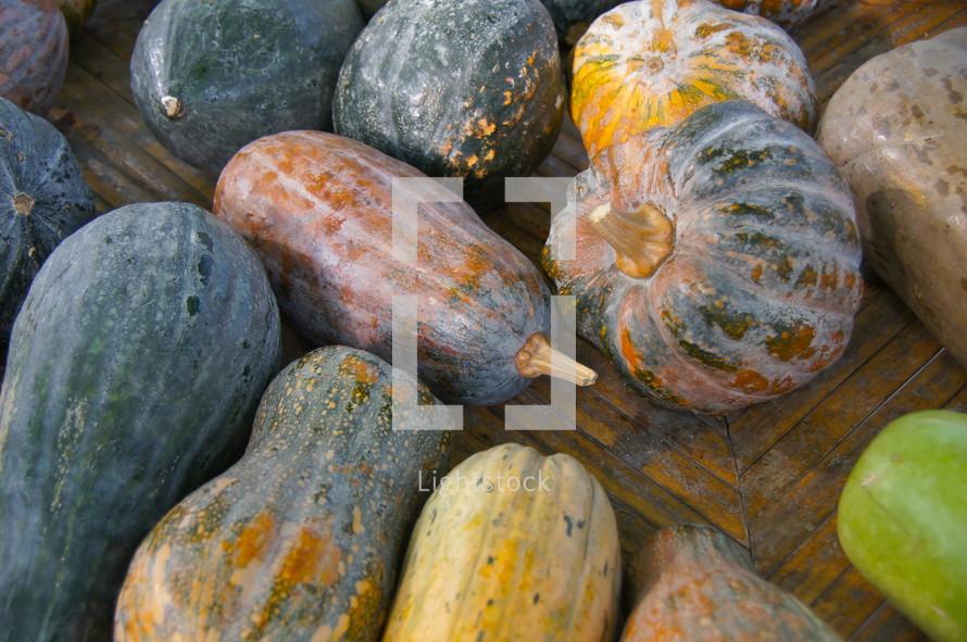 table - squash. Autumn, season, harvest, crop, food, seed, orange, pumpkins.