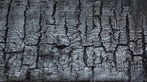 gray charred wood texture background