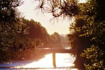 Daybreak on a lake through the trees.