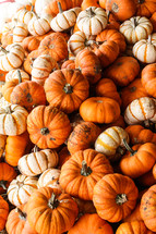 pile of mini pumpkins